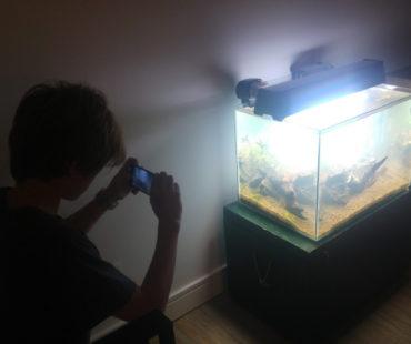 Beneficios en los niños al tener un acuario